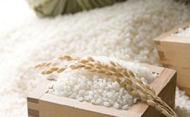 [№5659-0340]駒ヶ根市下平産 特別栽培米 コシヒカリ1等級 10kg