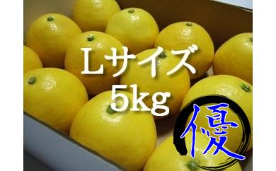 N03 西内小夏L<5kg・優品>[7,500円以上]