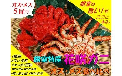 CB-03008 【北海道根室産】オス・メス花咲ガニ5尾食べ比べ![341054]