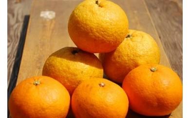 A431 【旬の品種をお届け】むなかた柑橘8kg