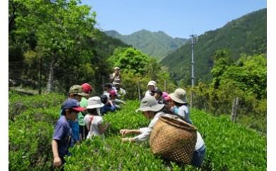 OS01 大杉谷自然学校 体験プログラム利用券 3枚
