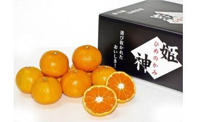 A422 【旬の品種をお届け】厳選!!むなかた柑橘ブランド「姫の神」シリーズ5Kg