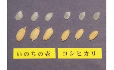 【0160-0038】飛騨産 いのちの壱 5kg×12ヶ月