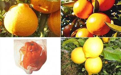 [№5850-0170]【5回頒布会】フジカワ果樹園オリジナル・季節の柑橘セット