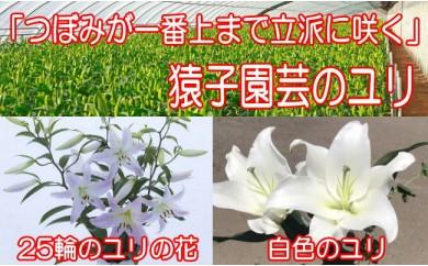 No.083 雫石町産の白色のユリ(25輪以上)・仏花用