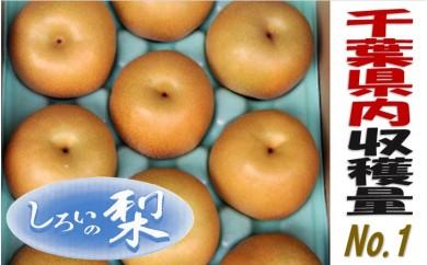 No.013 しろいの梨(あきづき・約5kg)