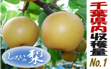 No.012 しろいの梨(豊水・約5kg)