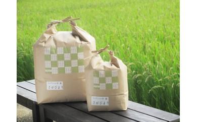 B048【29年産】【米農家の定期便】 さがびより 5kg×6カ月