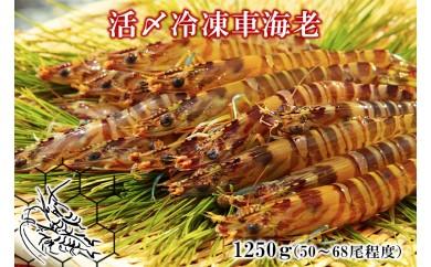 活〆冷凍車海老 生食用1250g(50~68尾程度)