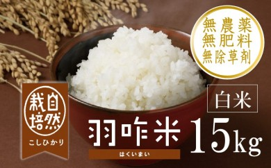 [A034] 【無農薬】【白米】能登のこだわり自然栽培こしひかり『羽咋米』 15kg(5kg×3袋)