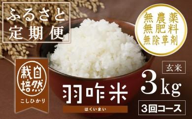 [A023] 【定期便】【無農薬】【玄米】能登のこだわり自然栽培こしひかり『羽咋米』 3kg×3回コース