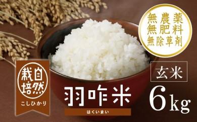 [A019] 【無農薬】【玄米】能登のこだわり自然栽培こしひかり『羽咋米』 6kg(3kg×2袋)