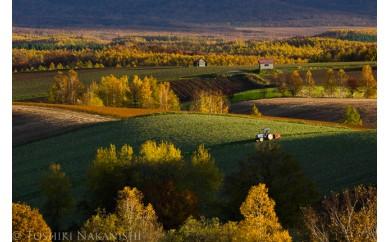 [060-06]写真家 中西敏貴 額付き写真「秋色の丘」(サイン入り)