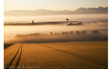 [060-05]写真家 中西敏貴 額付き写真「麦秋の丘」(サイン入り)
