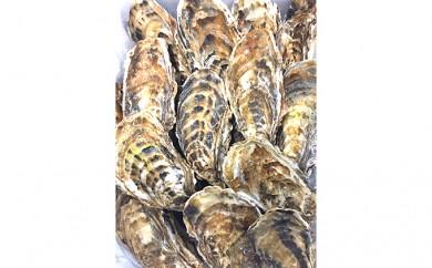 [№5833-0057]友好都市交流北海道湧別町のサロマ湖産 殻付き牡蠣21個前後B