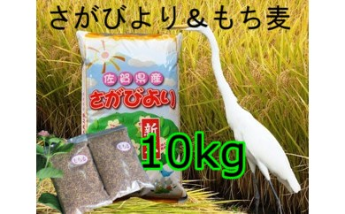 B5-008 8年連続食味連続「特A」さがびより10kg&もち麦3袋【健康志向】