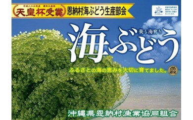 恩納村産 生海ぶどう/500g