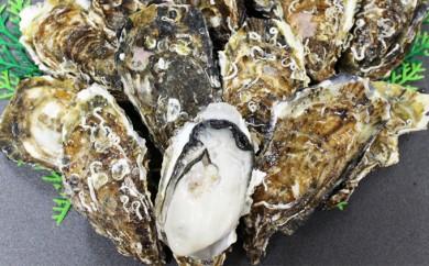 [№5742-0251]サロマ湖産殻付き2年物牡蠣貝(冷蔵) 5kg×1