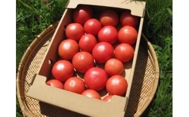 《期間限定》ひだかみ トマト&ミニトマトセット 大玉トマト2kg前後とミニトマト800g前後《数量限定》[B0091]