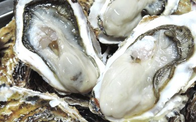 [№5742-0249]サロマ湖産殻付き2年物牡蠣貝(冷蔵) 1kg×2