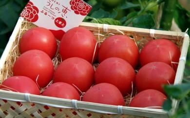 A-39 眞嶋農園の愛情たっぷり うしの恵フルーツトマト籠入り