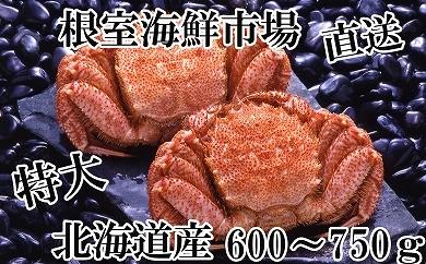 CB-14007 根室海鮮市場<直送>北海道産浜ゆで毛がに600~750g×2尾[348503]