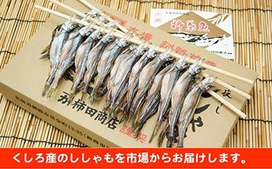 [Ka201-C054]【毎日食べたい方向け】くしろ産ししゃもメス30尾入りたっぷり3箱!