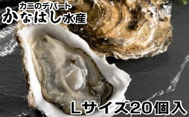 [Ka302-B006]釧路管内産活牡蠣(Lサイズ)20個入