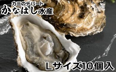 [Ka302-A015]釧路管内産活牡蠣(Lサイズ)10個入