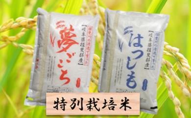 [№5644-0308]特別栽培米★精米20kg(分搗き可)または玄米22kg 【夢ごこち・ハツシモ】