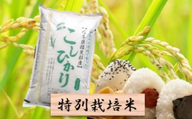 [№5644-0296]特別栽培米★精米10kg(分搗き可)または玄米11kg 【コシヒカリ】