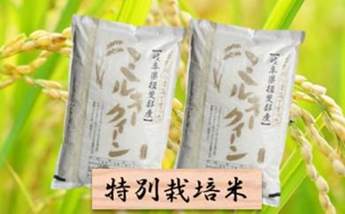 [№5644-0299]特別栽培米★精米20kg(分搗き可)または玄米22kg 【ミルキークイーン】