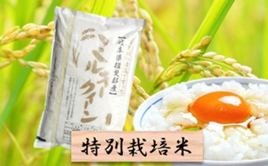 [№5644-0295]特別栽培米★精米10kg(分搗き可)または玄米11kg 【ミルキークイーン】