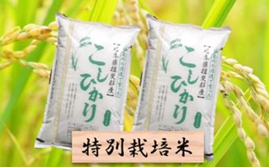 [№5644-0300]特別栽培米★精米20kg(分搗き可)または玄米22kg 【コシヒカリ】