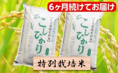 [№5644-0332]特別栽培米★[頒布会] 6カ月★毎月 精米20kg または玄米22kg 【コシヒカリ】