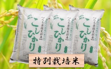 [№5644-0310]特別栽培米★精米30kg(分搗き可)または玄米33kg 【コシヒカリ】