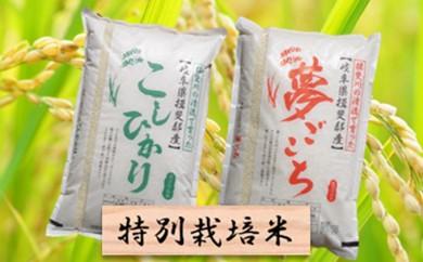 [№5644-0304]特別栽培米★精米20kg(分搗き可)または玄米22kg 【コシヒカリ・夢ごこち】