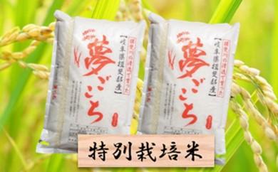 [№5644-0301]特別栽培米★精米20kg(分搗き可)または玄米22kg 【夢ごこち】