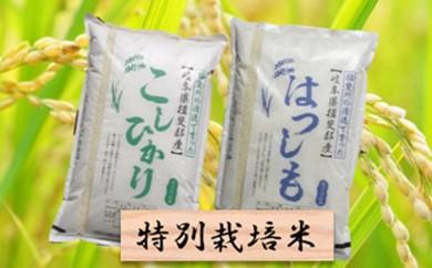 [№5644-0306]特別栽培米★精米20kg(分搗き可)または玄米22kg 【ハツシモ・コシヒカリ】