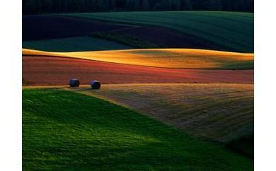 [020-03]写真家 菊地晴夫 額付き写真「輝く麦秋の大地」