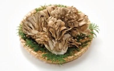 L7039【期間限定】森の精 乾燥舞茸 40g 自然からの贈り物 山の幸