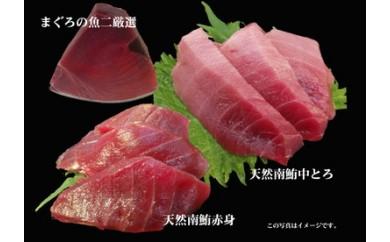 653-022 まぐろの魚二厳選 天然特特上南鮪中トロブロック③