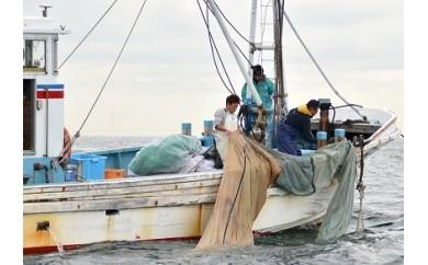 G5-02.底びき網漁本格体験と新鮮海の幸ご賞味 特別優待券【期間限定】