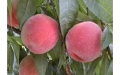 [J08]北信州の「桃」