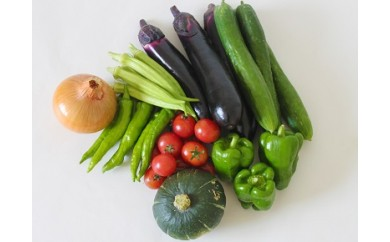 010-031 若葉農園の無農薬自然栽培野菜セット