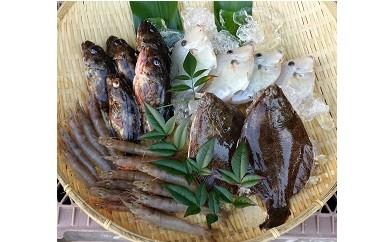 B-0011 瀬戸内海産 旬の魚セット