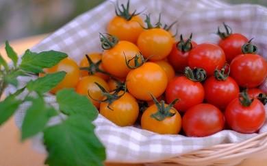 【049】 ほんとうにおいしい「生きている野菜」トマトセット