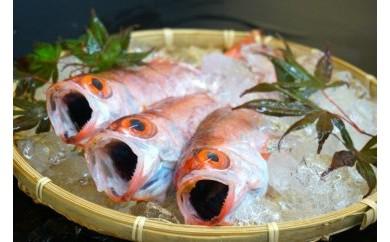 【数量限定100】幻の高級魚のどぐろ一夜干し【105pt】