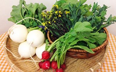 [№5700-0103]とれたて!旬の立川野菜 詰め合わせ