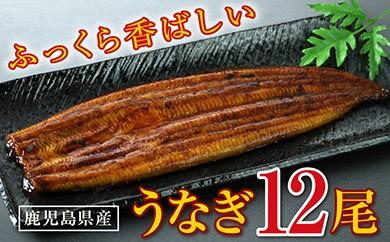 C-13 【うなぎたっぷり12尾!】ふっくら香ばしい!鹿児島県産特上うなぎ
